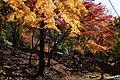161126 Kabusanji Takatsuki Osaka pref Japan25s3.jpg