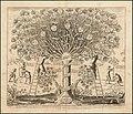 1675 pro-Catholic illustration of a cedar representing the Catholic Church.jpg