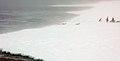 2007 Snow-Hill-Island Luyten-De-Hauwere-Emperor-Penguin-52.jpg