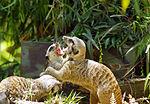 2012-06-09 Oakland Zoo 052 (7439958340).jpg