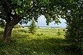 20120612 На южной стороне острова Юршинский. Под дубом.jpg