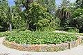 2014 Suchum, Ogród botaniczny (37).jpg