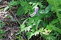 2015.06.06 11.08.02 IMG 2644 - Flickr - andrey zharkikh.jpg