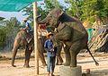 2016-04-08 Elephant Safari Krabi 13.jpg