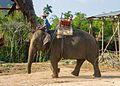 2016-04-08 Elephant Safari Krabi 14.jpg