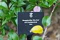 2016 Singapur, Ogrody botaniczne (056).jpg