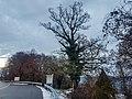 20201230 ND Eiche am Aussichtstürmchen Weilhardtblick Bgh1.jpg