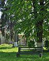 21-219-5012 Dovhe Age-old Linden Trees RB.jpg