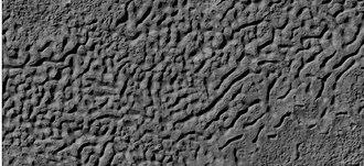 Brain terrain - Image: 25246brainseroding