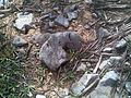 28 - Камни на поверхности.jpg