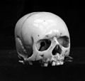 2 Netsuke Skulls in Ivory. Wellcome M0004070.jpg