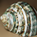 40 by 40 thumbnail of 'Green Sea Shell' (x4 SFG).png