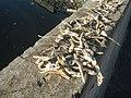 9768Dilis Pancit Lug-Log Foods Navotas City 23.jpg