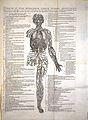A. Vesalius, De humani corporis fabrica Wellcome L0021651.jpg