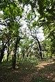 AJC Bose Indian Botanic Garden - Howrah 2018-04-01 2383.JPG
