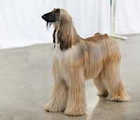 AKC Helena Fall Dog Show 2011.jpg
