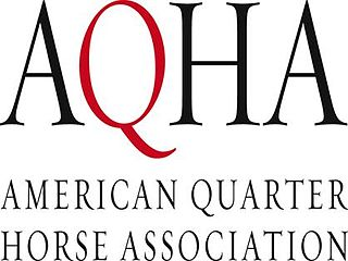 American Quarter Horse Association American horse breed registry for Quarter Horses