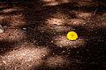 A Lone Flower (3756391787).jpg