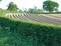 A furrowed field - geograph.org.uk - 416641.jpg