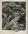 A lynx climbing up a tree. Etching (by J.E. Ridinger). Wellcome V0021094.jpg