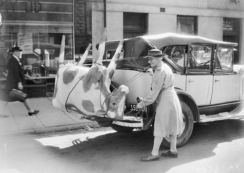A papier-mache cow on Mrs Mellor's car, 1944.jpg