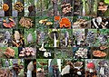 A patchwork of a weekend with lots of colourful mushrooms - panoramio.jpg