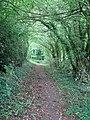 A shady path - geograph.org.uk - 1366006.jpg