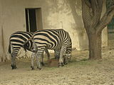 A view from kuwait zoo by irvin calicut (69).JPG