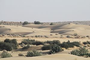 Arid Forest Research Institute - Sand Dune in Rajasthan