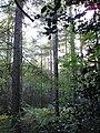 Abbey Wood - geograph.org.uk - 63721.jpg