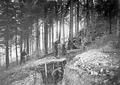 Abschlussarbeiten an einem Schützengraben - CH-BAR - 3240425.tif