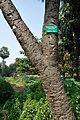 Acharya Jagadish Chandra Bose Indian Botanic Garden - Howrah 2011-01-08 9885.JPG