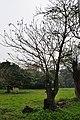 Acharya Jagadish Chandra Bose Indian Botanic Garden - Howrah 2011-02-20 1551.JPG