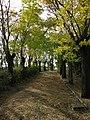 Acqui Terme (Italy) (23603324859).jpg