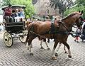 Alblasserdam (29) - Flickr - bertknot.jpg