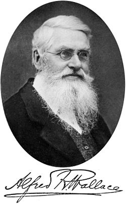 Alfred Russel Wallace, and signature, from the frontispiece of Darwinism (1889)