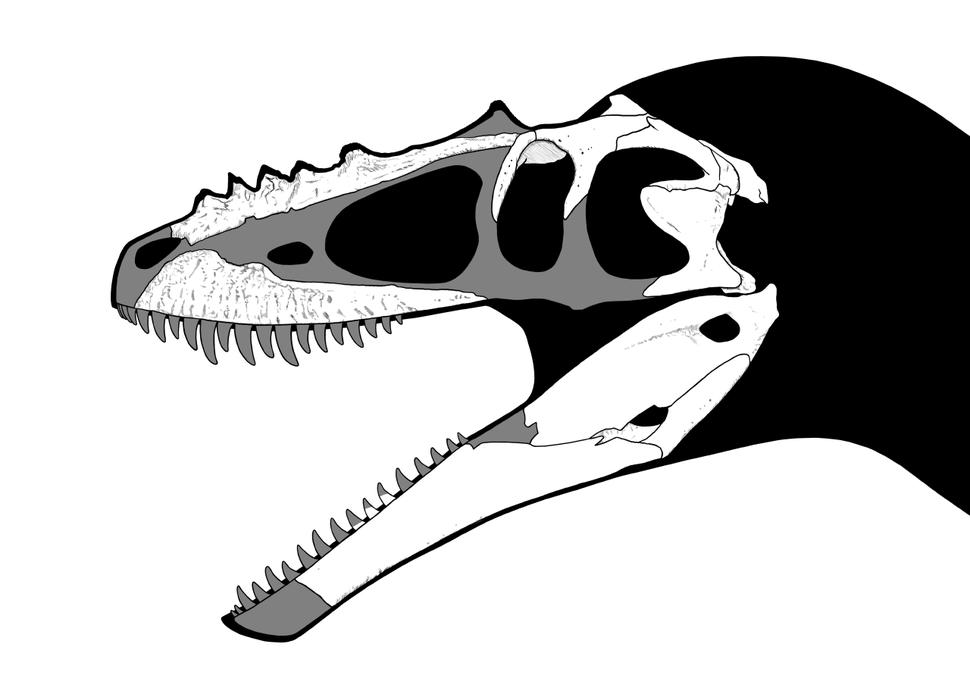 Alioramus skull steveoc