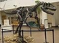Allosaurus SDNHM.jpg