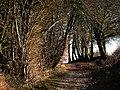 Alresford Lane by Cheriton Wood - geograph.org.uk - 696860.jpg