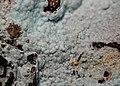 Alumohydrocalcite-92158.jpg
