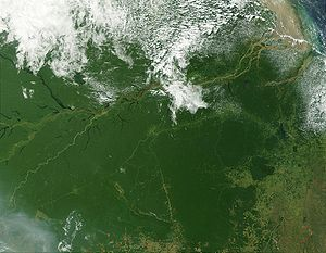 Geography of Brazil - The Amazon Rainforest