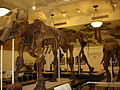 American Museum of Natural History in Manhattan, New York City, United States of America (9860036584).jpg