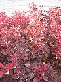Amin al-Islami Park - Trees and Flowers - Nishapur 018.JPG