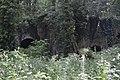 Anciennes forges de Queille (2).jpg