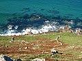 Ancient field boundaries below Escalls Cliff - geograph.org.uk - 1502236.jpg