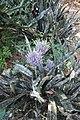Andromeda Botanical Gardens 03.jpg