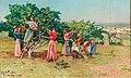Angiolo Tommasi - Harvest in Tuscany.jpg