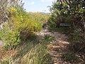 Anice Falls Track - panoramio (3).jpg