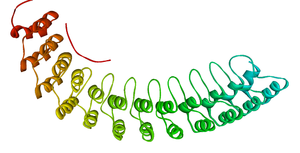 Ankyrin repeat - Image: Ankyrin R membrane binding domain 1N11