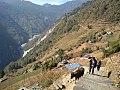 Annapurna Base Camp-Trek.jpg